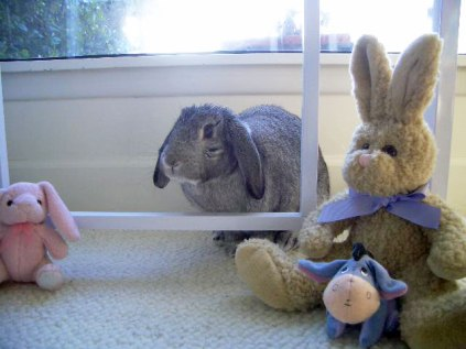 nestor with bunnies