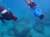 snorkeling the bimini road