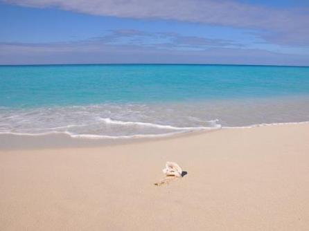 beach bimini