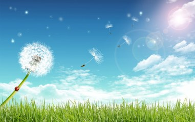 dandelion-under-blue-sky