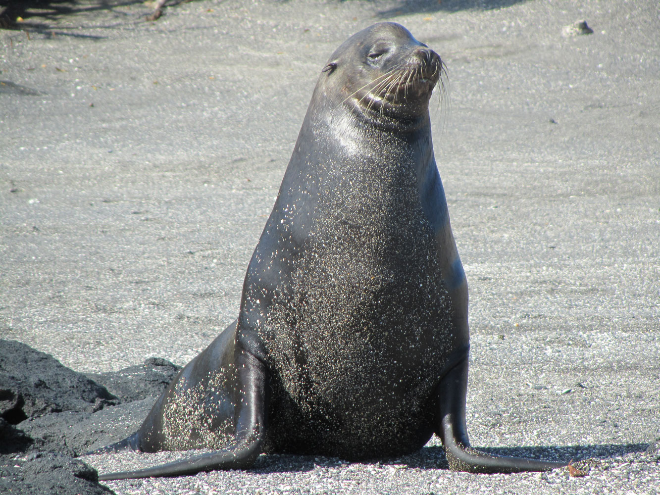Sea Lion Wisdom Balancing Inner Outer To Reveal The Truth