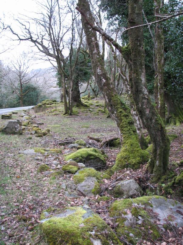 Ireland 2008 062