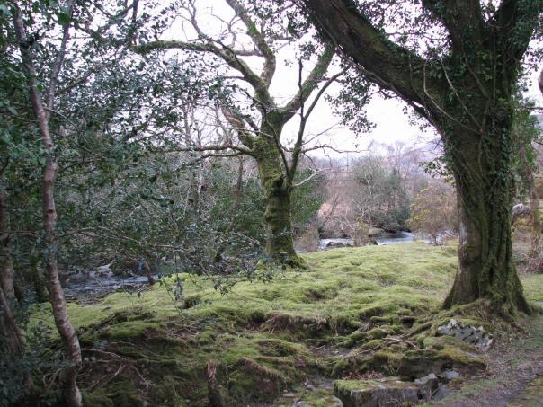 Ireland 2008 065