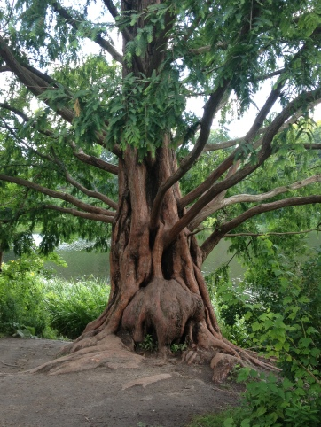 magickal tree in high park, toronto