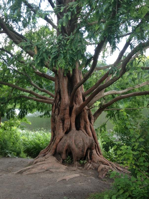 magickal tree in high park, toronto