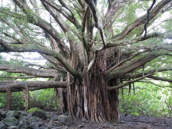 Maui 031