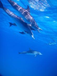 dolphin arc9