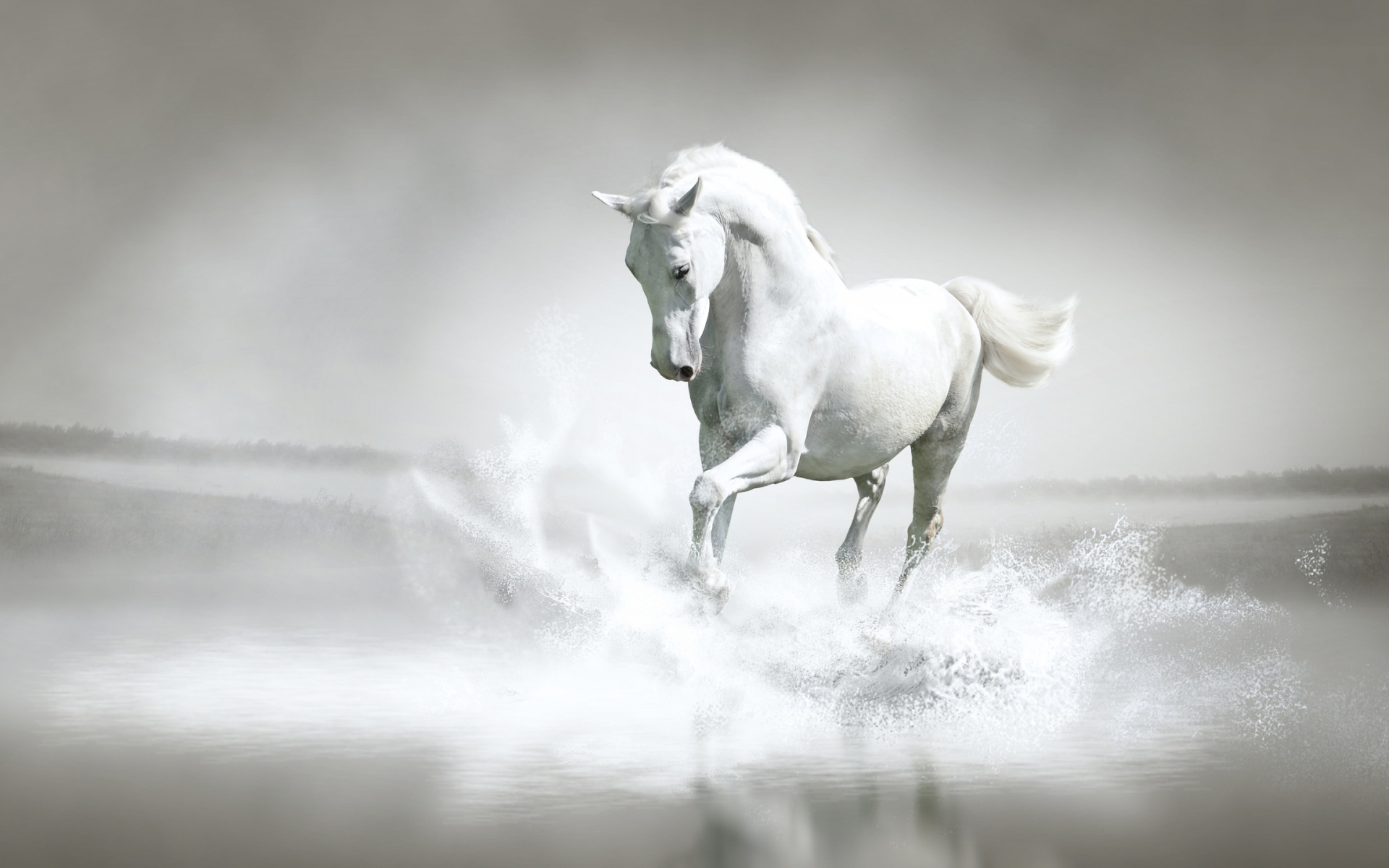 Beautiful Wallpaper Horse Stunning - horse-1  Photograph_846227.jpg
