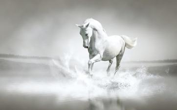 horse (1)