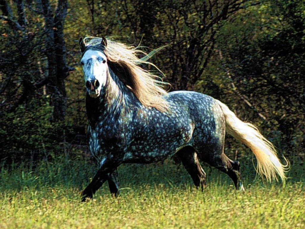 Fantastic Wallpaper Horse Ipod Touch - horse1  Photograph_154277.jpg