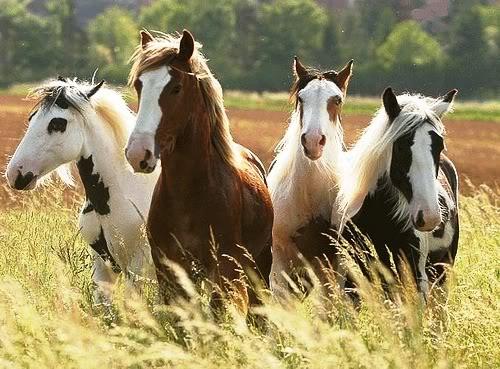 horse3 (1)