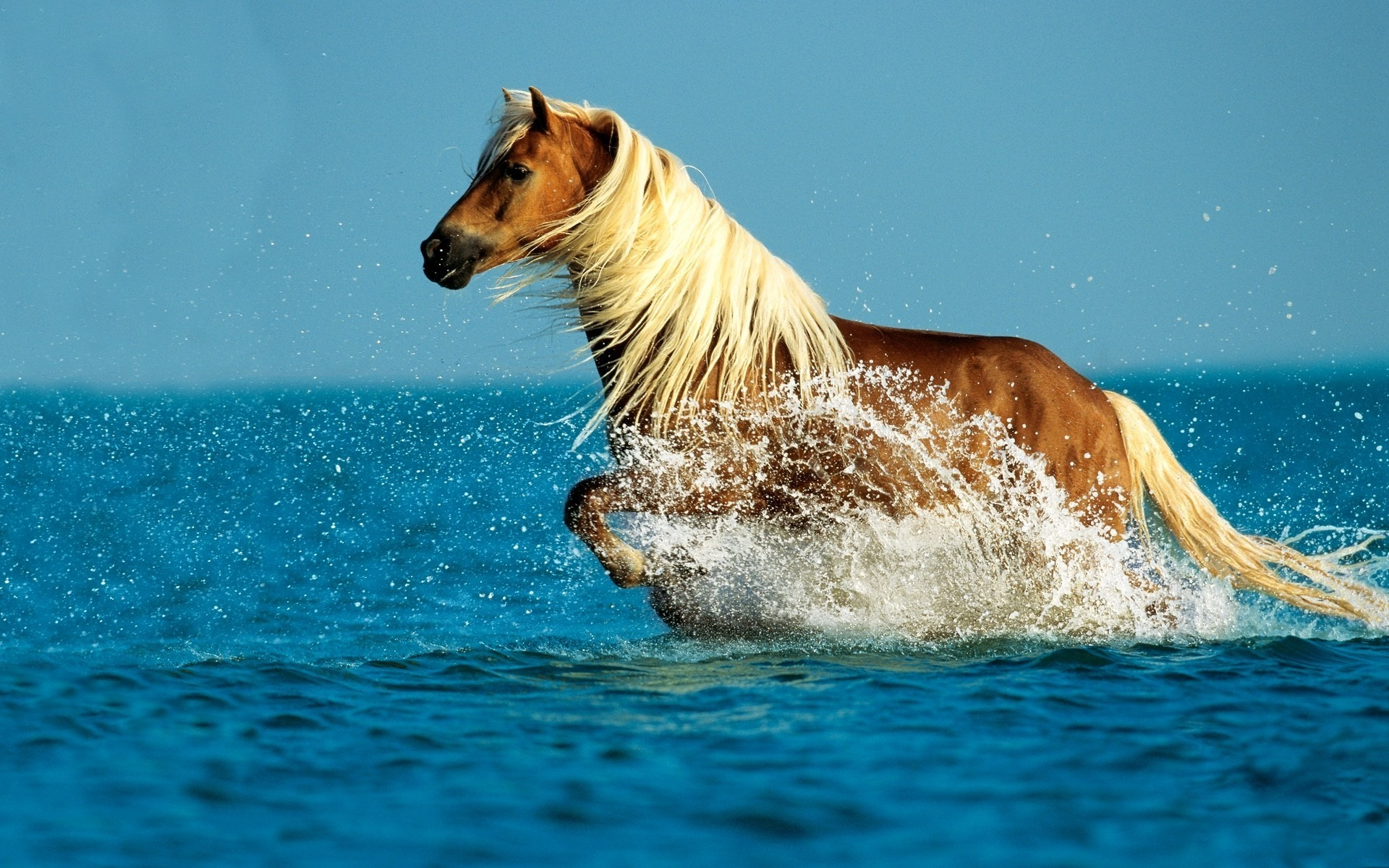 Beautiful Wallpaper Horse Stunning - horse3  Photograph_846227.jpg