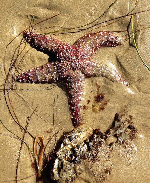 sunday starfish (6)