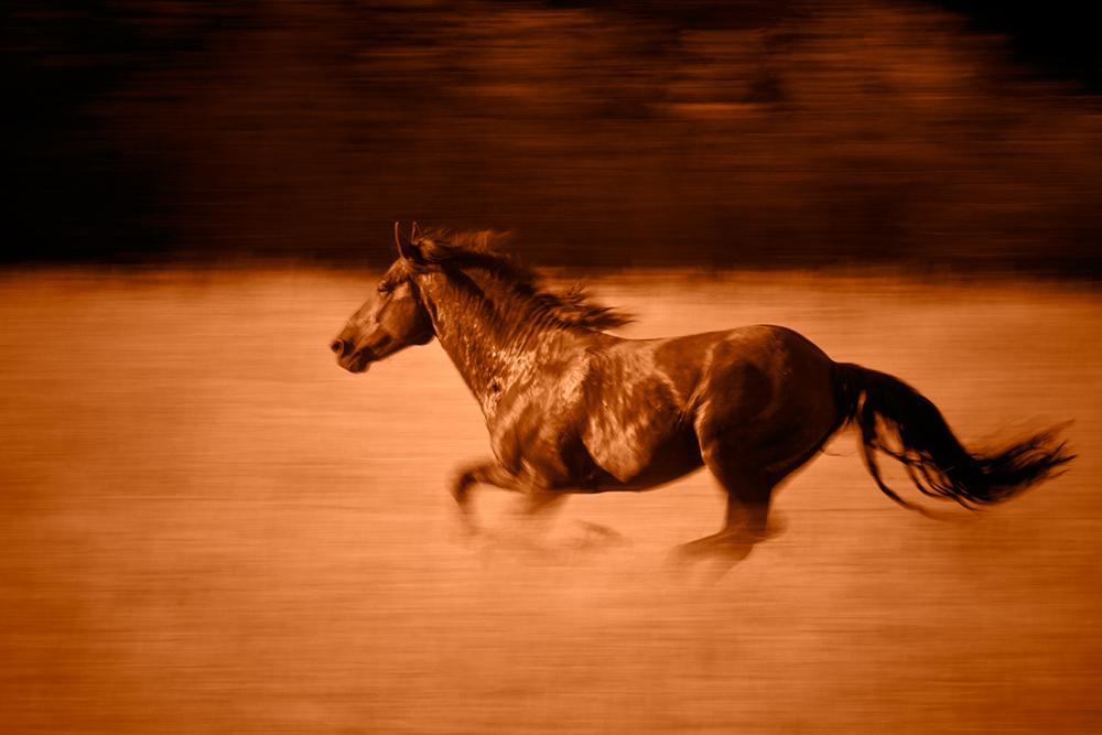 Horse Symbolism Tania Marie