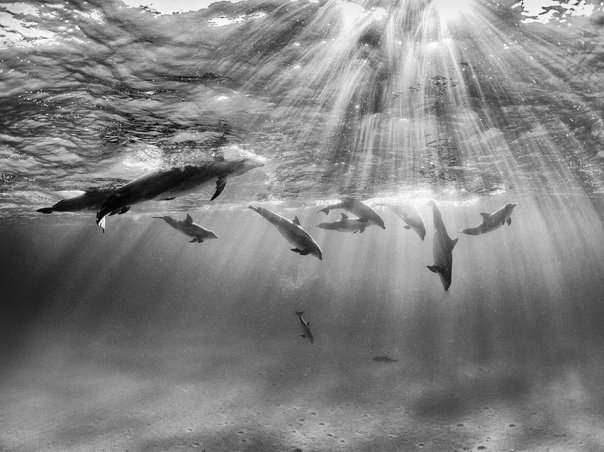 dolphins in bimini by nadia aly