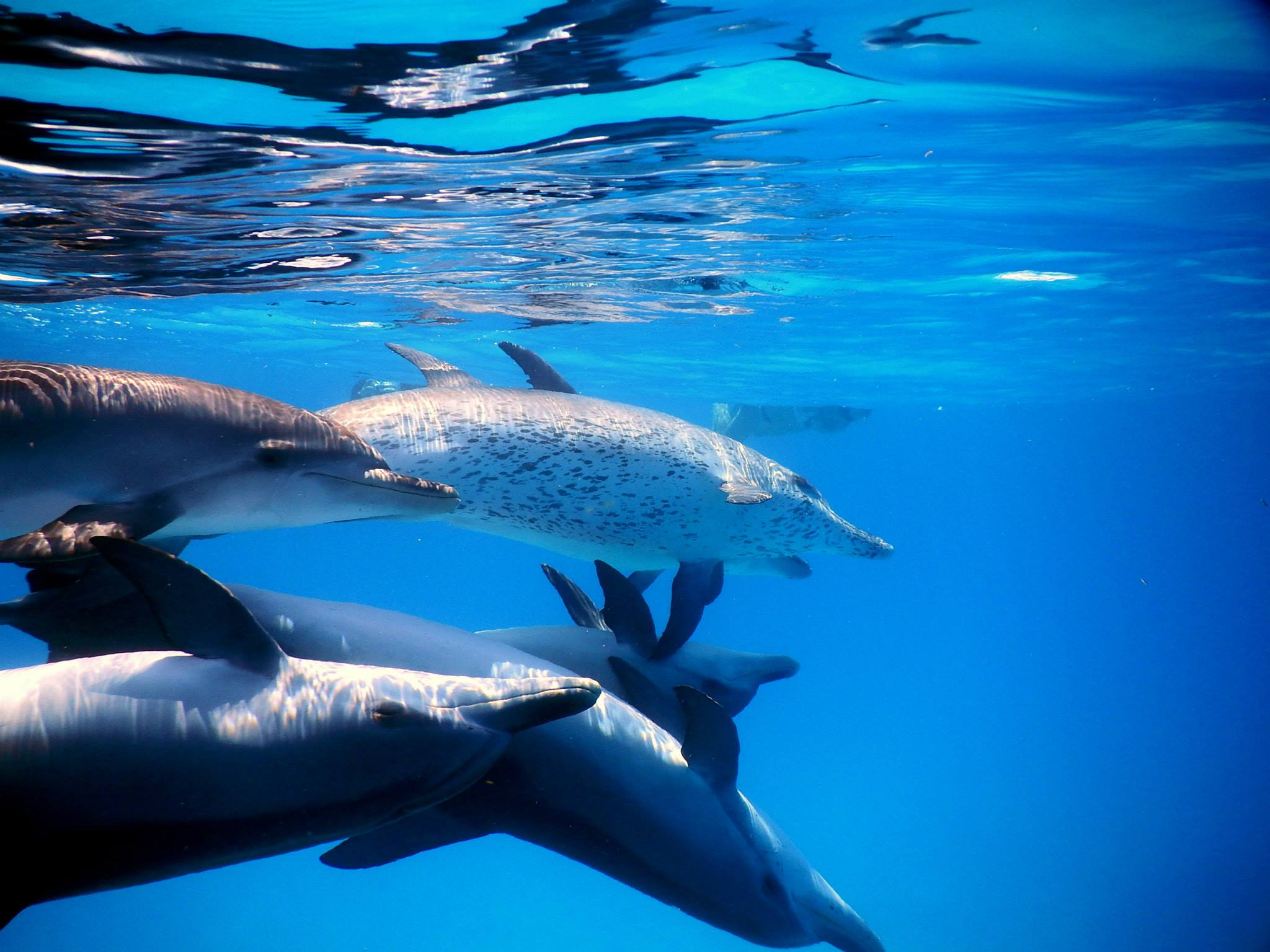 Pretty pictures of dolphins forming a heart love in my heart with each