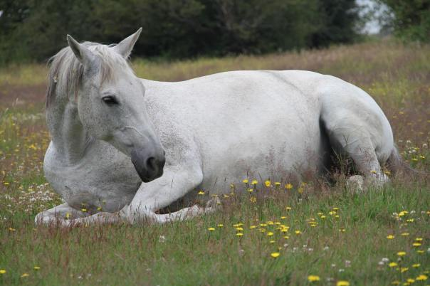 hillary's horse