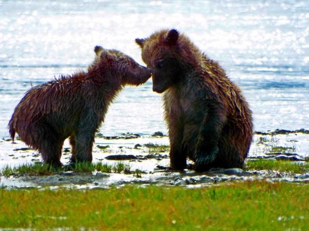bear cubs5