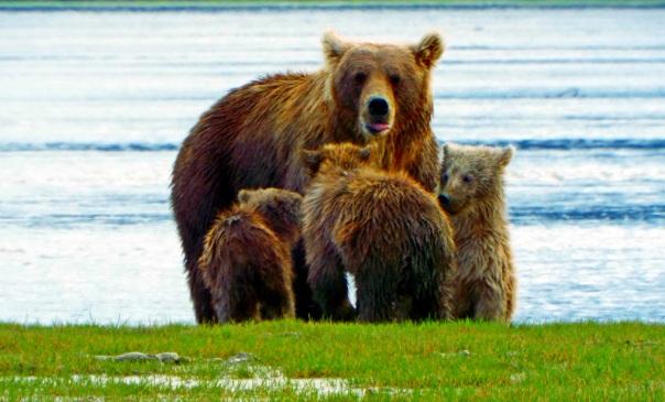 bear family1