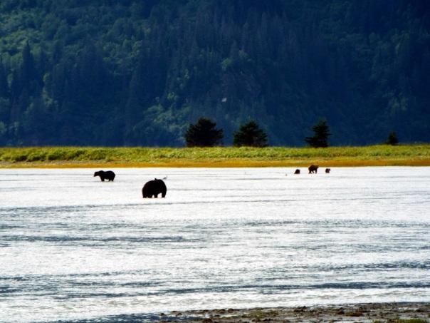 bear vista2