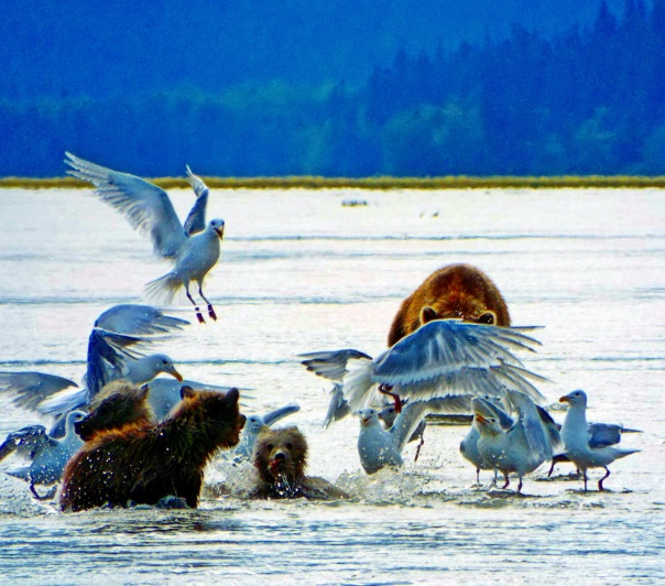 bears playing with birds