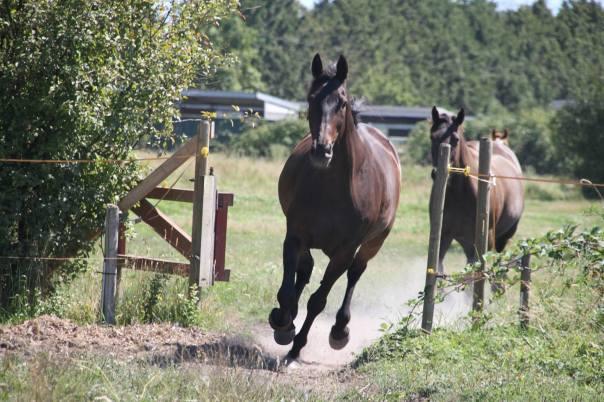epona rise horses (2)