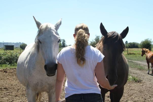 horses epona rise