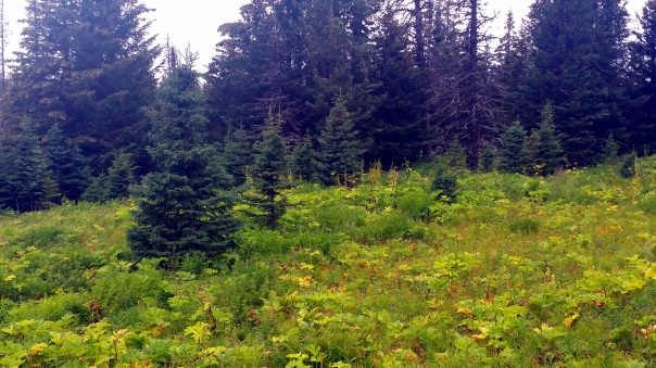 nature hike2