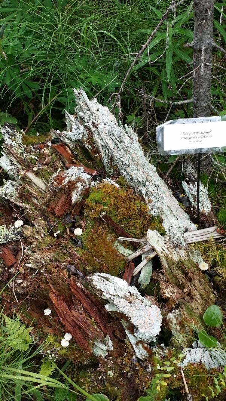 wynn trail (8)