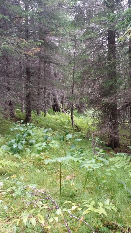 wynn trail (9)