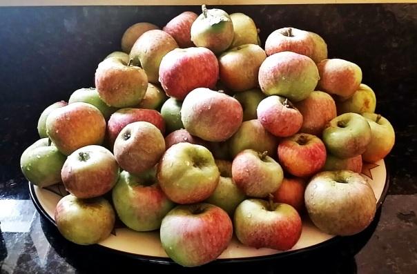 66 apples