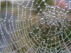 work.4363262.1.flat,550x550,075,f.indras-web-spiders-web-laden-with-dew-2