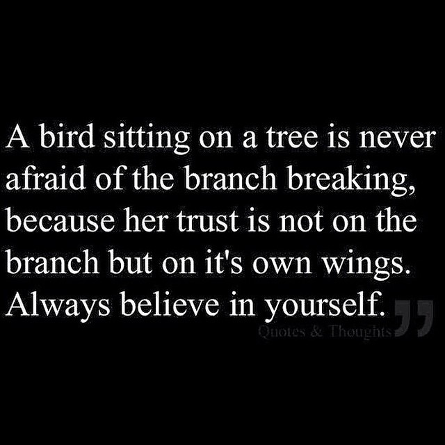 bird wings and trust