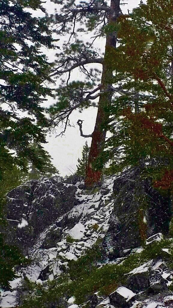 lake tahoe (25)