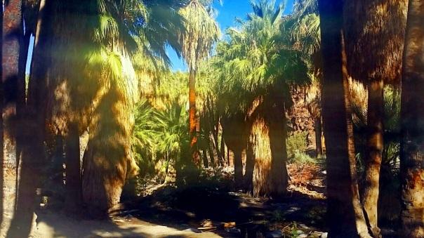 oasis17