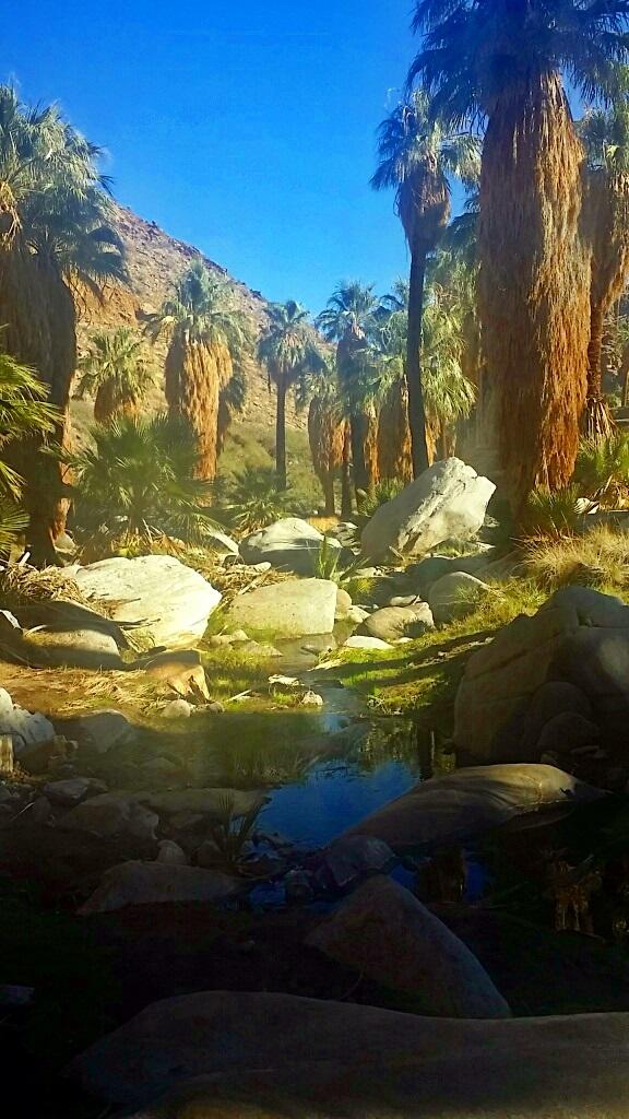 oasis20
