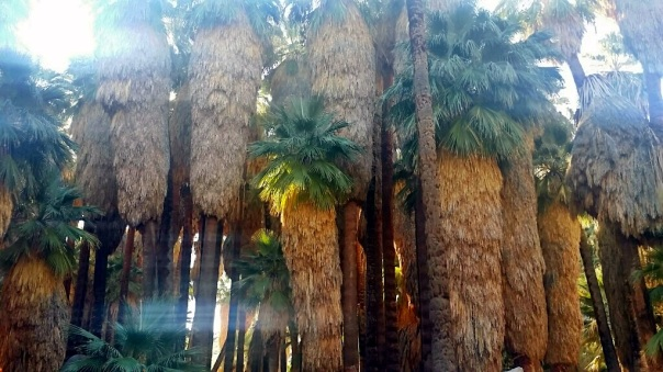 oasis22