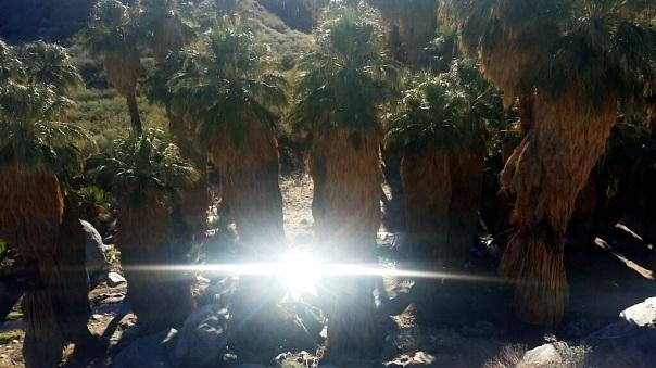 oasis23