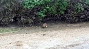 rabbit6 - Copy