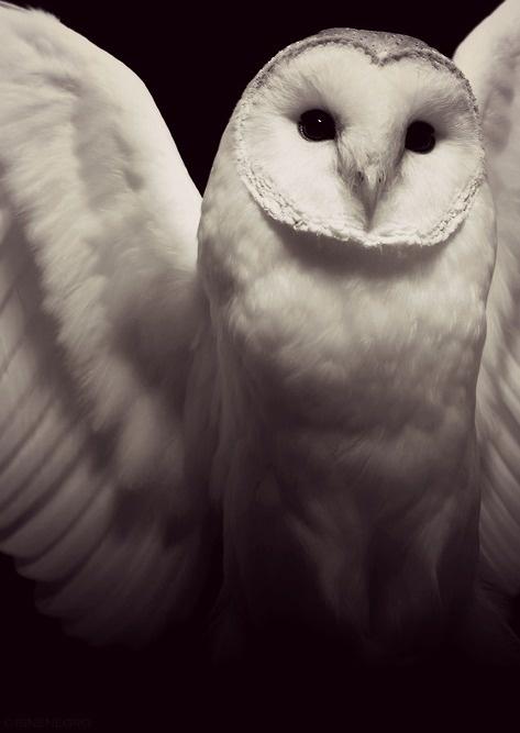 Výsledok vyhľadávania obrázkov pre dopyt owls tumblr desert