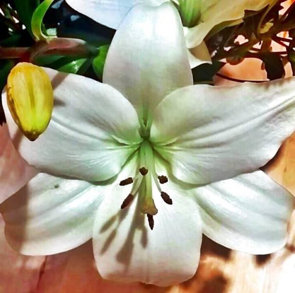 angel faery flower