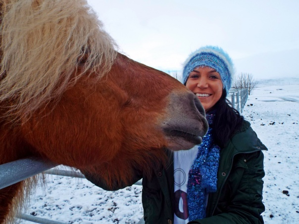 icelandic horse3
