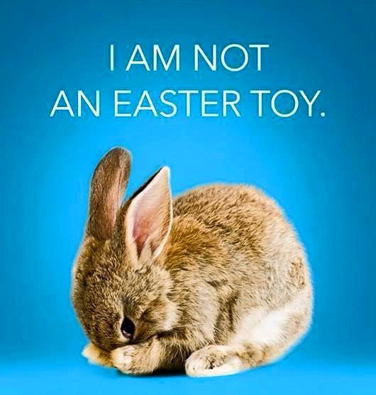 i am not an easter toy