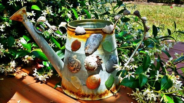 seashells11