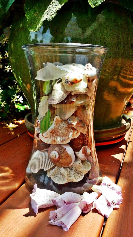 seashells9