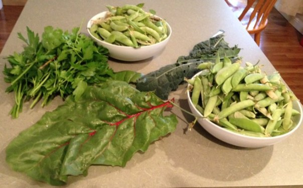peas, parsley, chard and lacinato kale