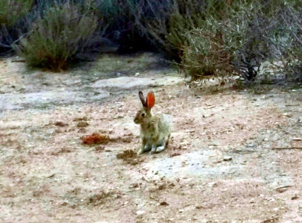rabbit3