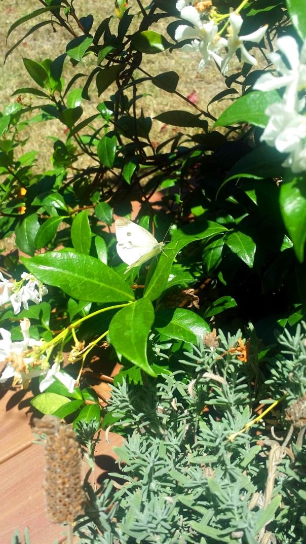 white butterfly garden