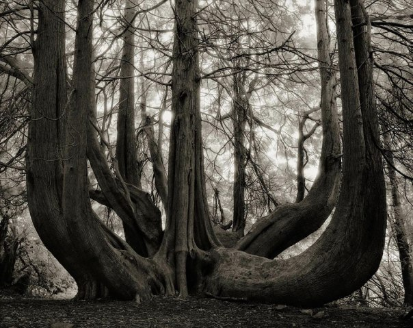 ancient trees by beth moon