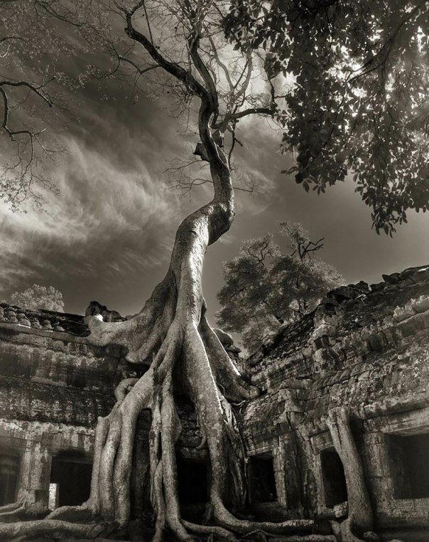 ancient trees by beth moon2